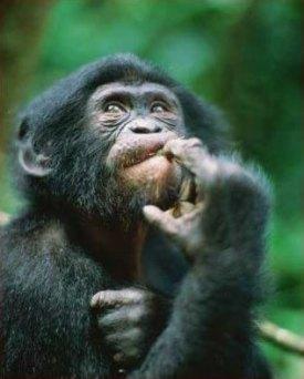 macaco pergunta